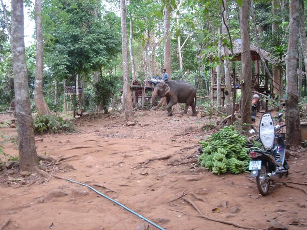 Elephant Working Farm in Ko Chang Thailand